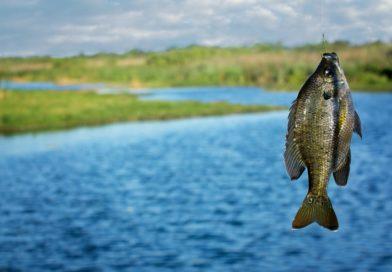 «Ловись, рыбка…» по новым правилам