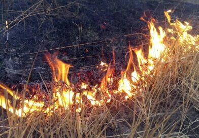 За пожары в лесах калужан оштрафовали на 3,5 миллиона рублей