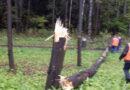 В Заовражье высадят деревья
